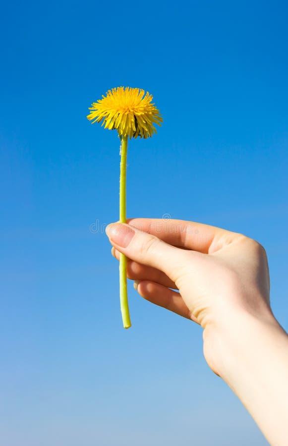 background blue dandelion hand sky woman στοκ εικόνα