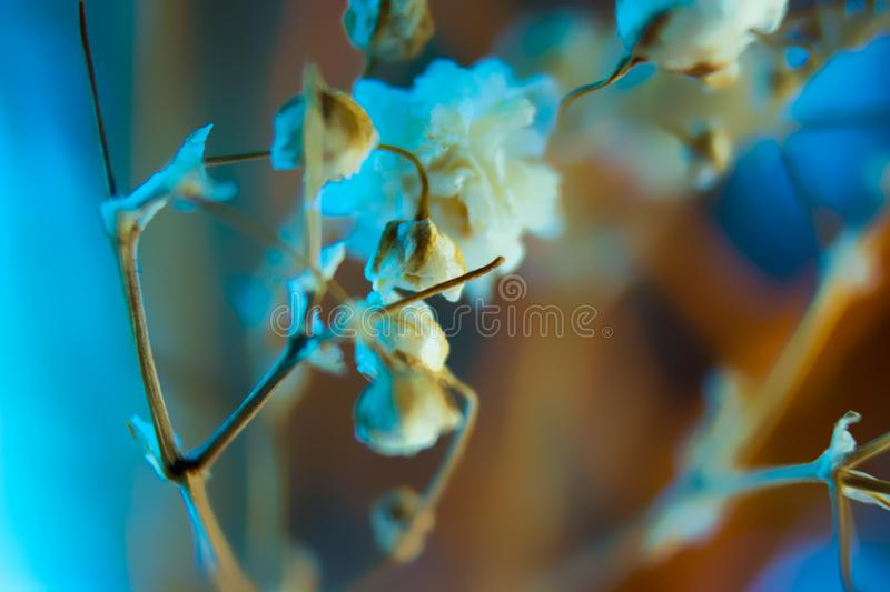 Background - blue orange yellow white colors. Blue orange white yellow colors of background with flowers of babys breath - gypsophila paniculata royalty free stock photos
