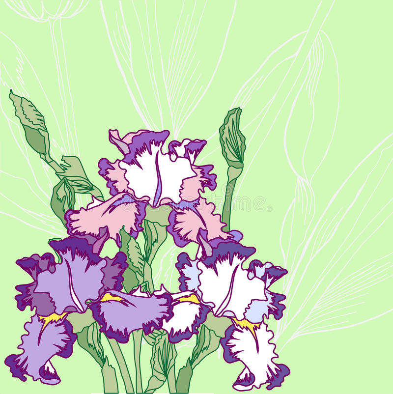 Background with blue pink irises. Vector illustration royalty free illustration