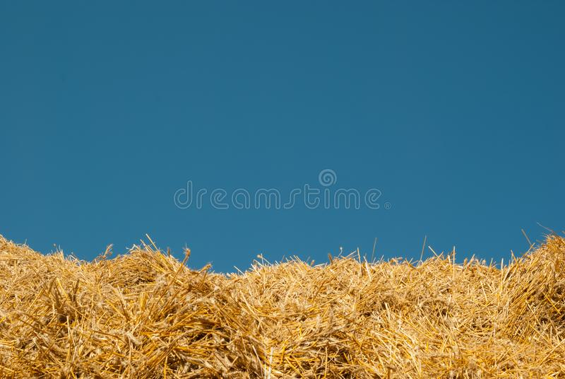 The background of the blue sky and yellow straw the summer landscape is ideal for the background of the inscription stock photo