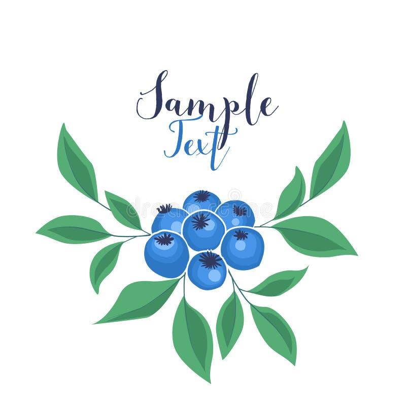 Background of blueberries fruit vector illustration