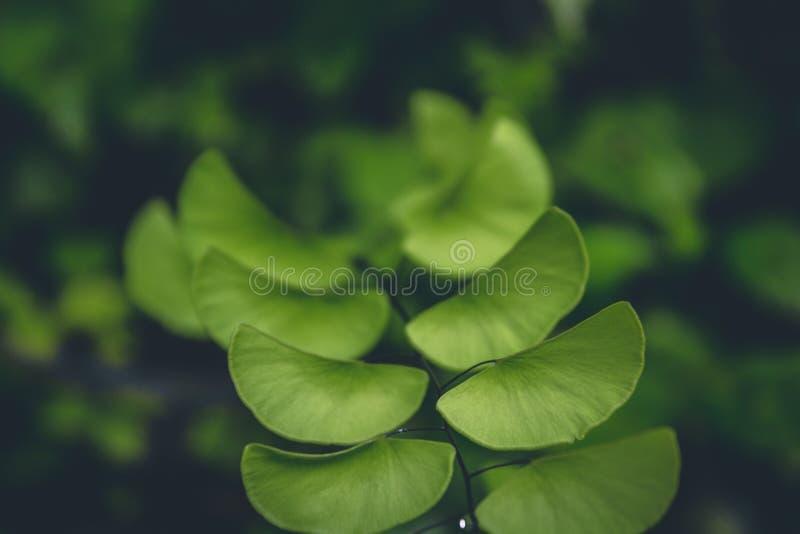 Background, Blur, Botanical stock photography