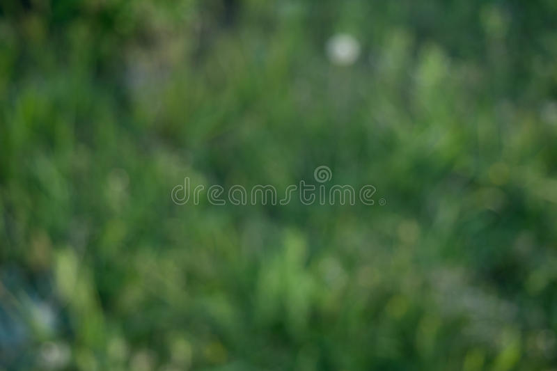 Background of blurred grass. Bright, saturated background of blurred green spring grass royalty free stock photos