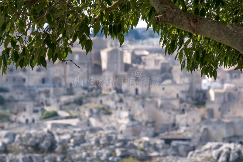 In background, blurred houses built into the rock in the cave city of Matera, Basilicata Italy, Tree in focus in foreground. Houses built into the rock in the stock photo