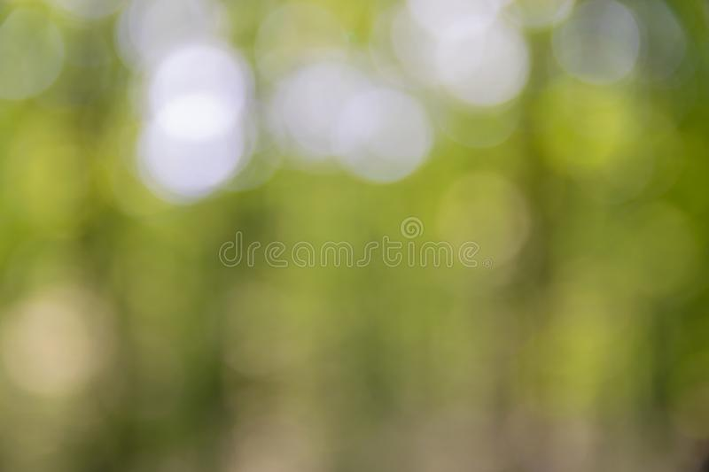 Background blurred from trees seen from below, wide angle. Woods, environments, outdoors, forests, landscapes, natures, views, angles, talls, greens, skies royalty free stock images