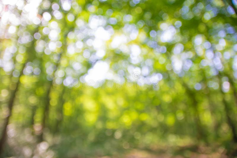 Background blurred from trees seen from below, wide angle. Woods, environments, outdoors, forests, landscapes, natures, views, angles, talls, greens, skies royalty free stock photography