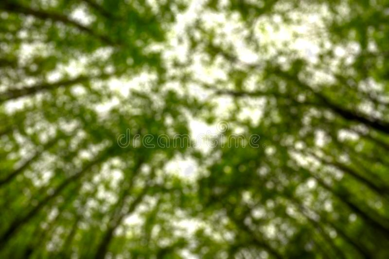 Background blurred from trees seen from below, wide angle. Woods, environments, outdoors, forests, landscapes, natures, views, angles, talls, greens, skies stock photography