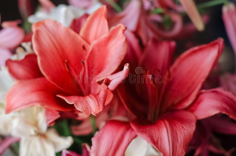 Background from a bouquet of red lilies closeup stock photography