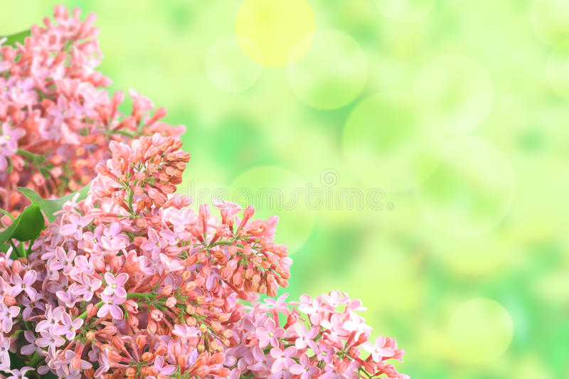 Download Background With Branch Of Pink Lilac Stock Image - Image: 41382825