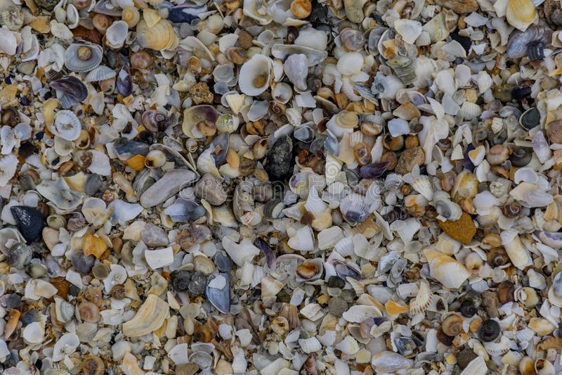 Natural background of broken seashells on beach. royalty free stock photos
