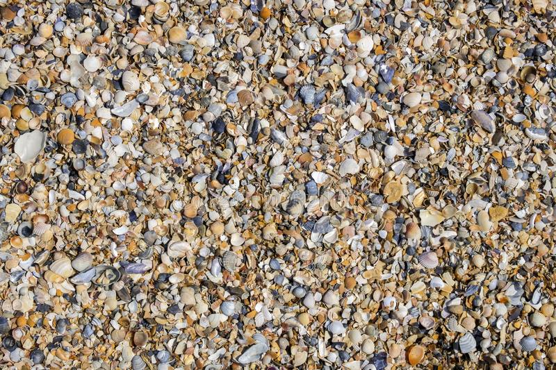 Background of the broken and whole shells stock photography