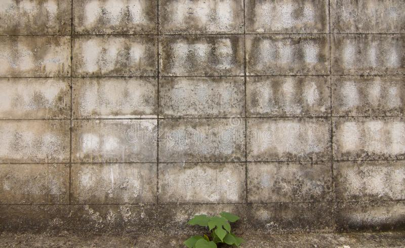 Background of brown cement wall royalty free stock photography