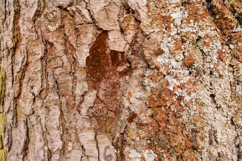 Background brown tree trunk texture. Tree closeup and nature concept royalty free stock photo