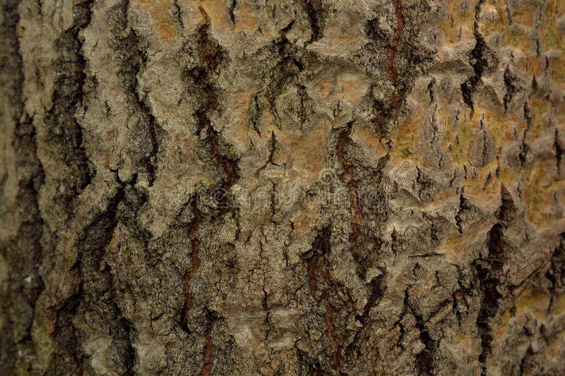 Background brownish gray bark with moss royalty free stock image