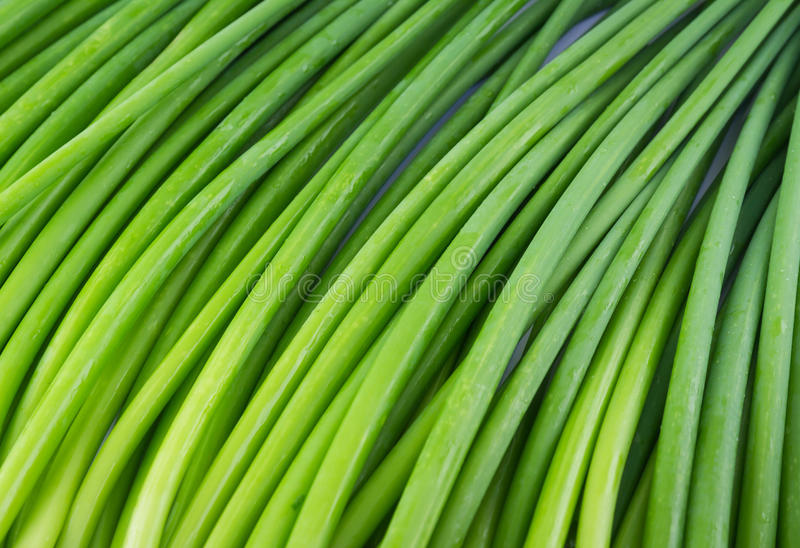 Background of A bunch of fresh Garlic chives flowers (green Nira grass) stock photography