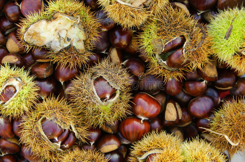 Background of chestnut stock photos