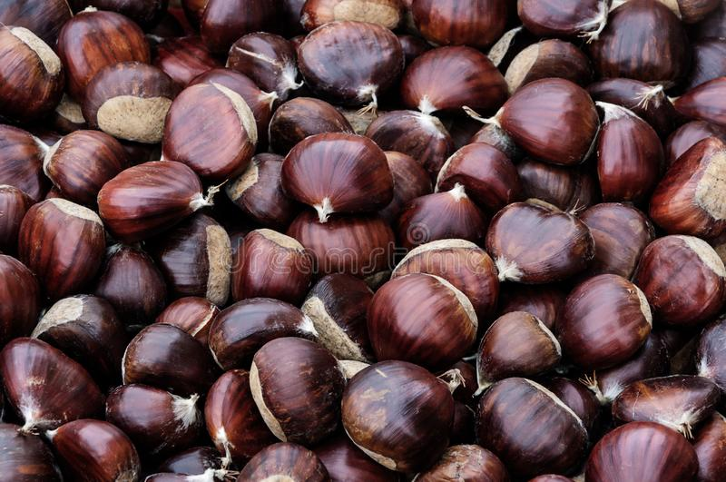 Background of chestnuts ust picked royalty free stock image