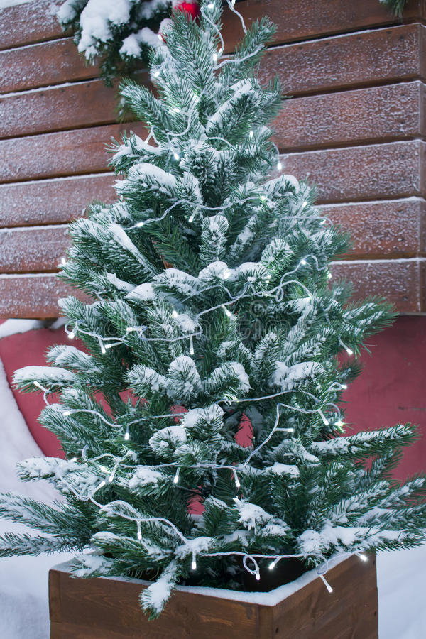 Background of Christmas trees in the snow. And Christmas lights stock photo
