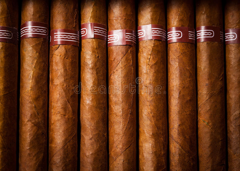 Background cigars in humidor. Close up of cigars in open humidor box stock images