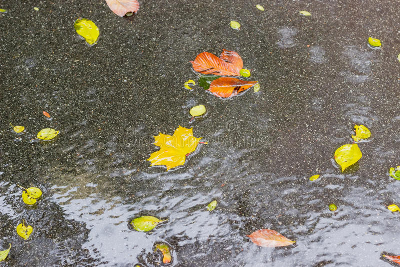 Background of coated with water asphalt with wet fallen leaves royalty free stock photo