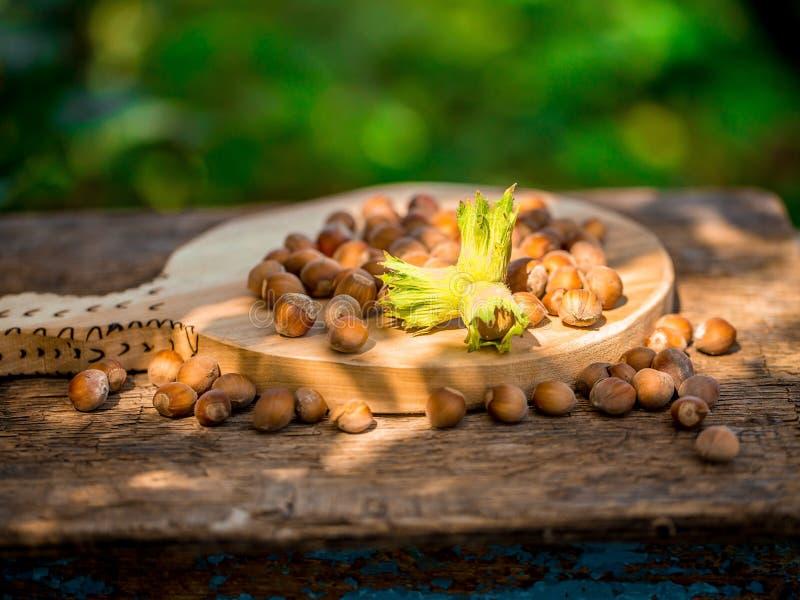 Hazelnuts stock photography