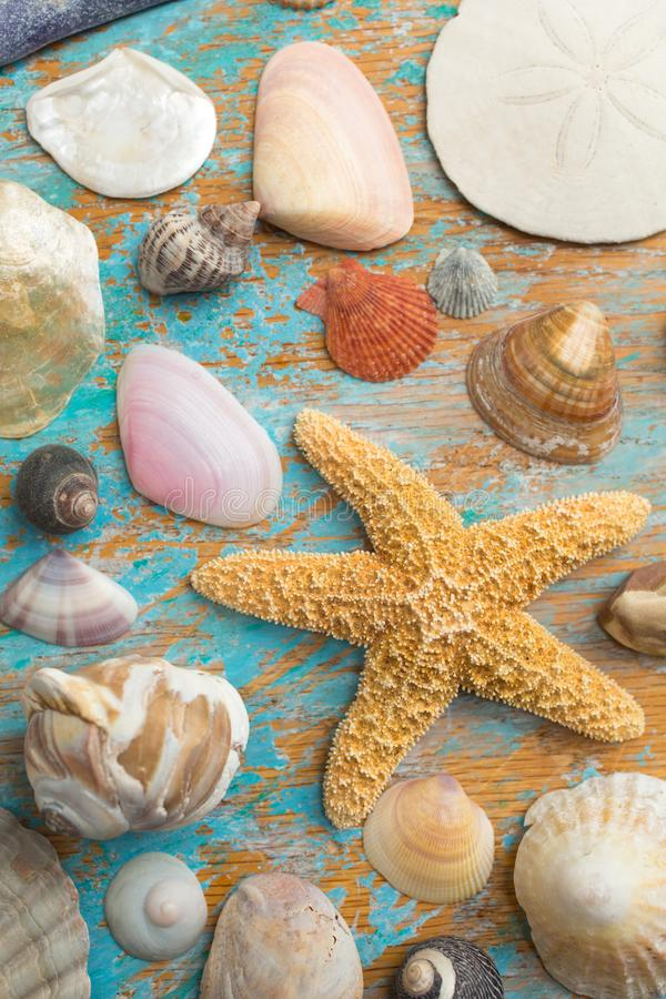 Collection of seashell and starfish royalty free stock photography