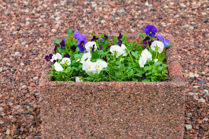 Background of colored gravel and bright spring flowers in stone pot stock images