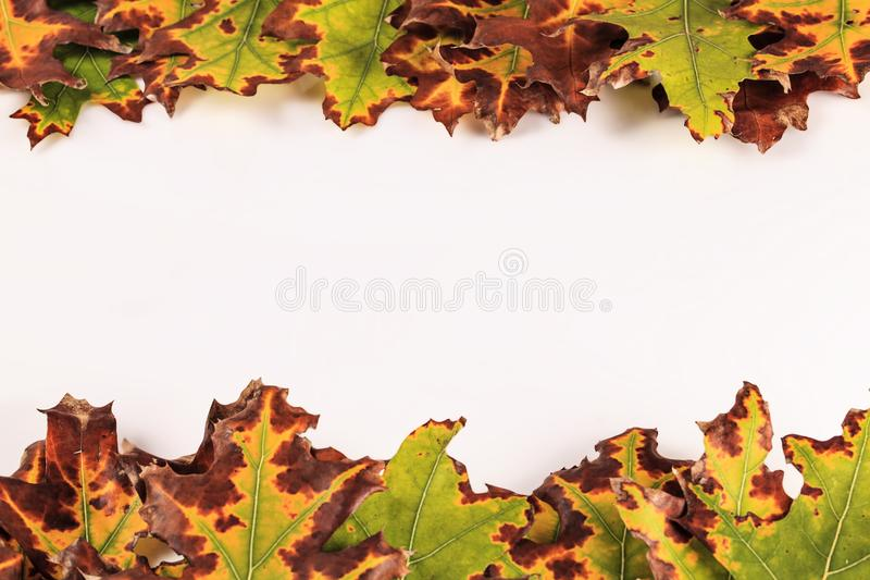 Background with Colorful autumn leaves border isolated on white stock photo