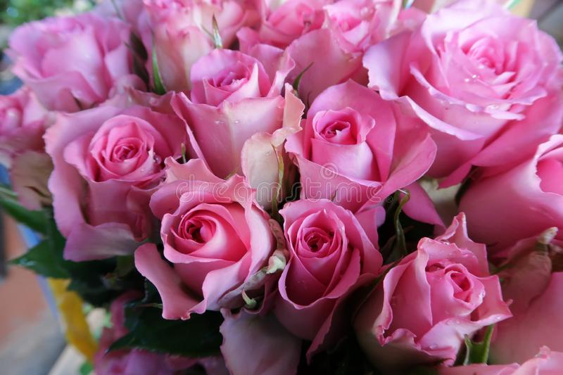 Background with colorful roses brilliant for special days part 11 royalty free stock photography