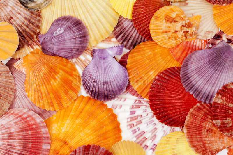 Background with colorful sea shells of mollusks, close up.  stock photo