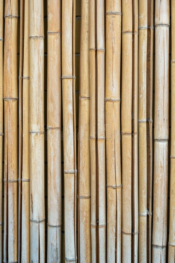 Background of cracked dry bamboo stems. Vertical photo format royalty free stock photography