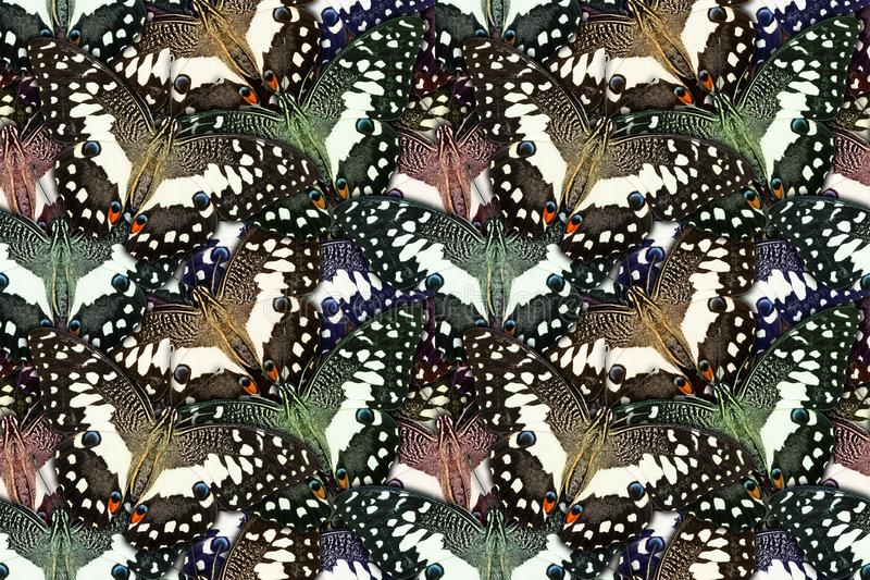 Background created from butterfly stock images