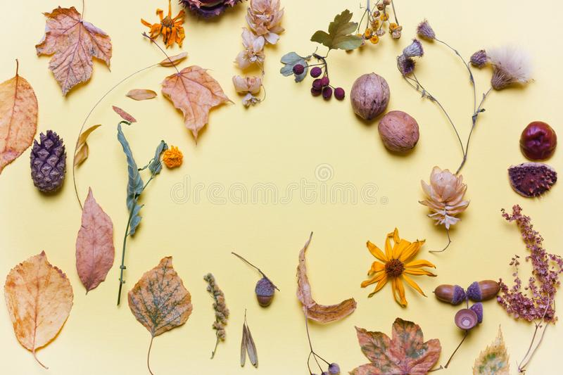 Background yellow dry leaves, acorn, flowers. Autumn concept . Pastel colors. Top view, flat stock image
