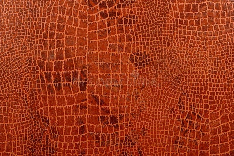 background crocodile skin στοκ εικόνες