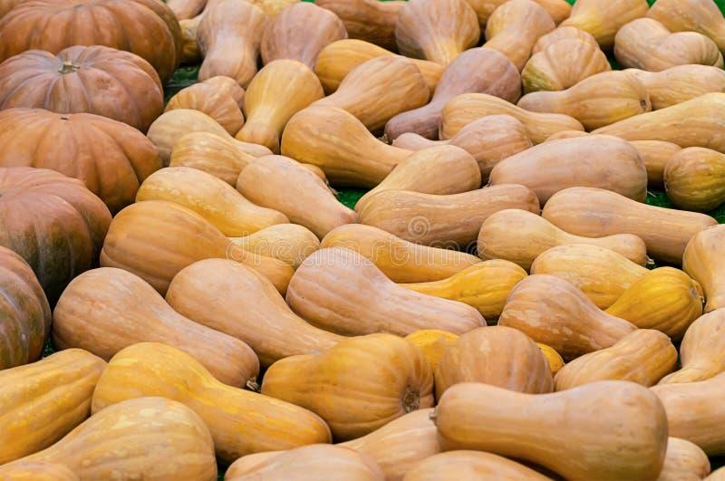 Background crop of pumpkins, long round fruit orange texture pattern stock images