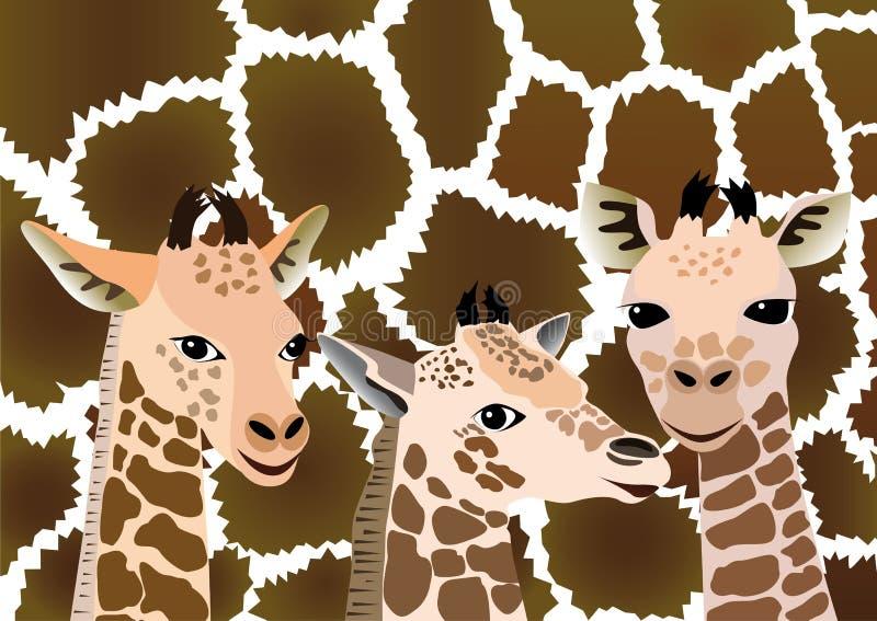 Background with cubs giraffe. Three cubs giraffe on background skin adult giraffe vector illustration