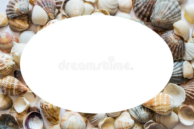 Background with different seashells on the sides and isolated in the center of white space for text. Large photo royalty free stock images