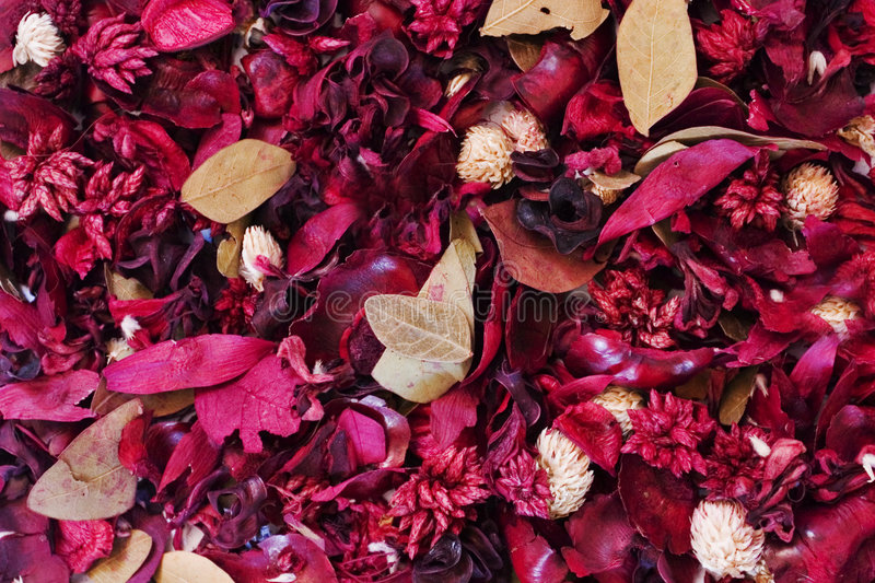 Background: Dried Flowers stock image