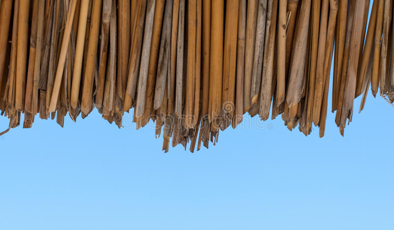 Background of dried reeds ecological materials. Background of ecological materials dried reeds stock photography
