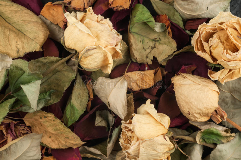 Background of dried roses stock photography