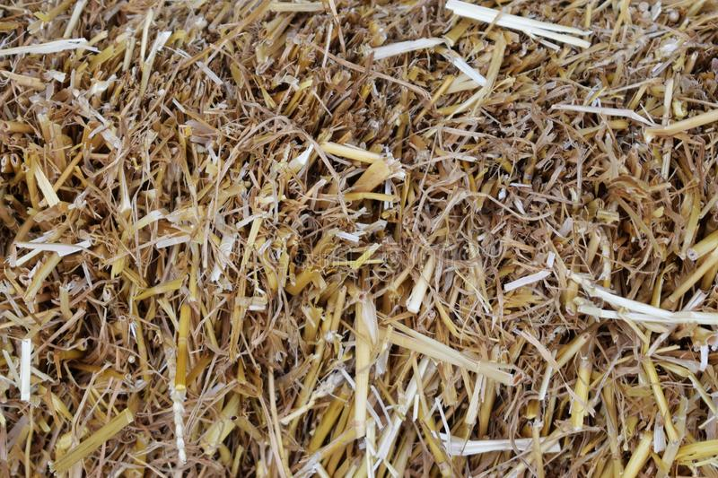 Background of dried straw grass, close-up stock images