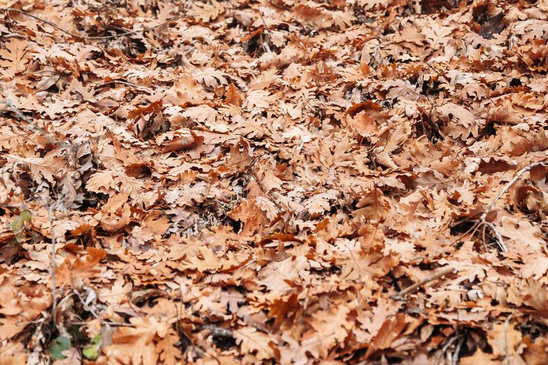 Background of dry autumn leaves. Outdoors stock photos