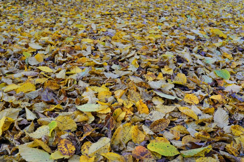 Background with dry autumn leaves. Background of dry autumn leaves for printing on paper or textiles royalty free stock photos