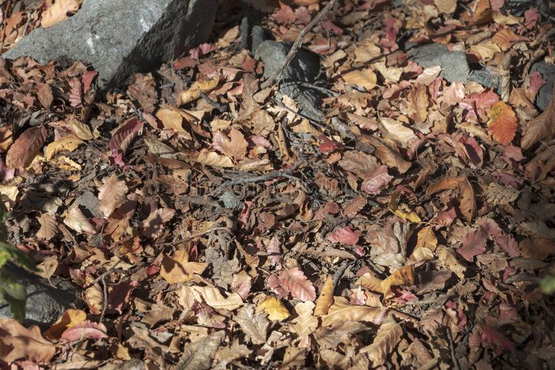 Background with Dry brown flora, grass and leaves at autumn royalty free stock image