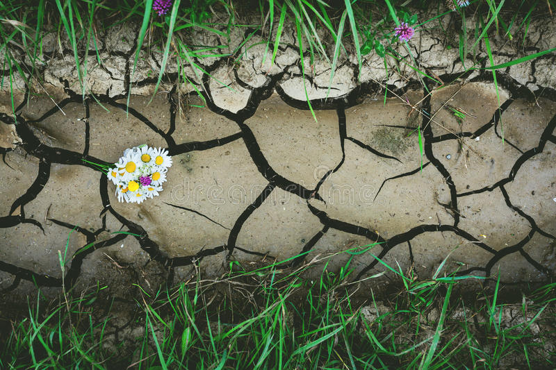 Background with dry crack ground with flowers and green grass stock images