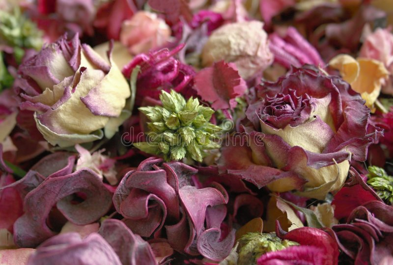 Background of dry flowers stock photos