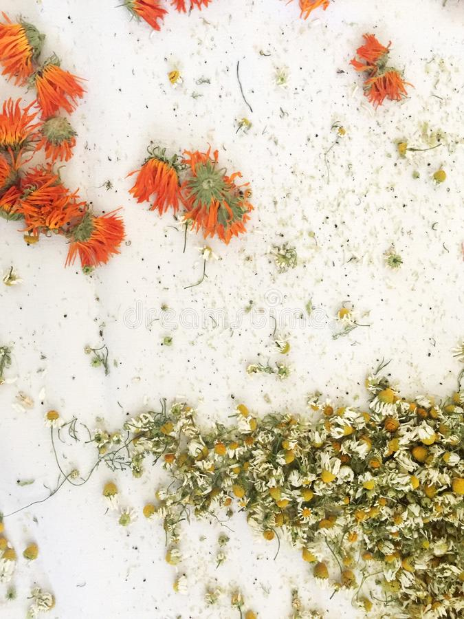 Background with dry herbs. Chamomile, calendula. stock photos
