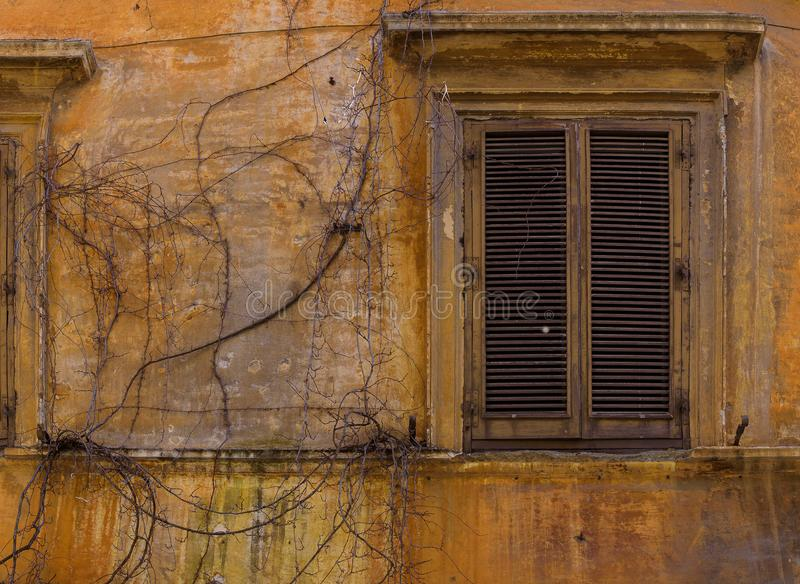Background with dry ivy and old window royalty free stock photos