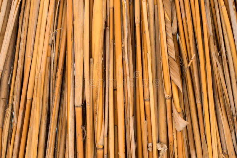 Background of ecological materials dried reeds. Background of dried reeds ecological materials royalty free stock image