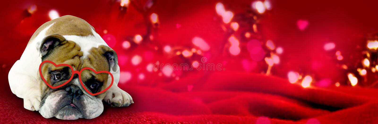 Background with english bulldog and lots of hearts. Lovely valentines background with englisch bullog a lot of hearts royalty free illustration